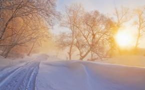 Picture winter, light, nature, fog, morning