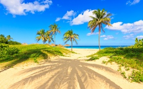 Picture palm trees, paradise, shore, palms, beach, sea, sand, sea, sand, shore, beach, summer, tropical