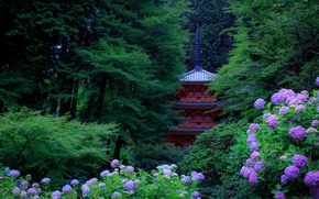 Wallpaper flowers, Park, trees, the bushes, Kyoto, Japan, hydrangea, greens, pagoda