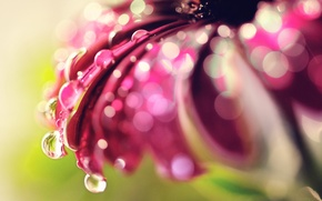 Picture PETALS, ROSA, WATER, DROPS, FLOWER