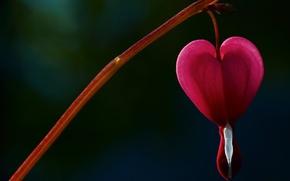 Picture flower, flowers, background, tree, pink, Wallpaper, blur, wallpaper, heart, widescreen, background, broken heart, full screen, …