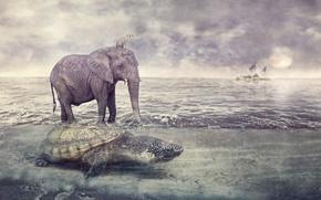 Picture sea, animals, elephant, turtle