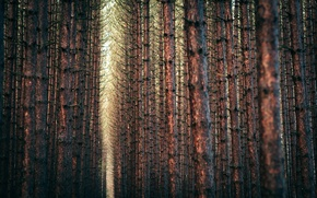 Wallpaper forest, nature, trees, branches, trees, 2560x1600, forest, branches, nature, landscape, landscape