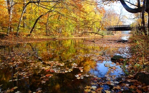 Picture autumn, forest, the sky, bridge, river