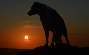 Picture each, dog, silhouette, dog