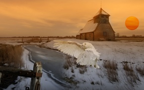 Picture winter, field, the sun, flight, house, rendering, owl, the building, art, pond, Wallpaper from lolita777