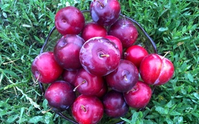 Picture Fruit, vitamins, plum, drain, the gifts of summer