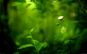 Picture plant, nature, green