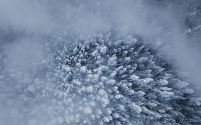 Wallpaper winter, forest, snow, the view from the top, trees.fog