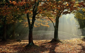 Picture autumn, forest, rays, fog
