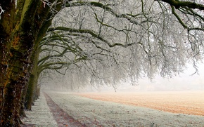 Picture winter, field, forest, snow, trees, landscape, nature, the way, frost, white, white, forest, trees, field, ...