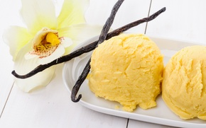 Picture ice cream, Orchid, sweet, vanilla, Orchid, dessert, Ice cream, Sweets