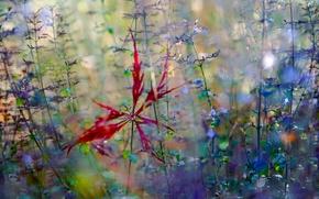 Picture autumn, macro, flowers, sheet, fallen star