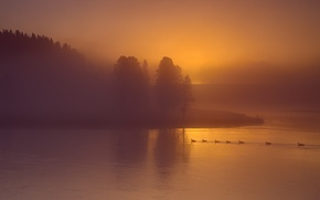 Picture the sky, trees, fog, river, duck