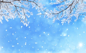 Wallpaper glare, snow, blue, winter, the sky, branches, snowflakes