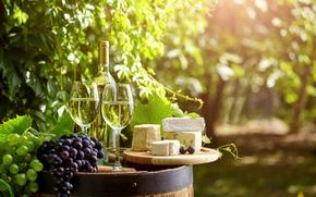 Picture bottle, barrel, garden, wine, bokeh, cheese, tube, greens, glasses, grapes