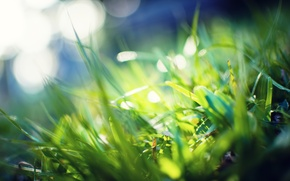 Picture greens, grass, macro, rays, light, photo, background, green, Wallpaper, plants