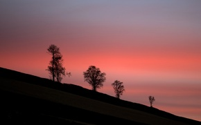 Picture twilight, trees, sunset, hill, dusk, silhouettes