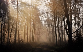 Picture road, forest, nature, morning