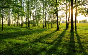 Picture summer, landscape, long shadows, the edge of the forest