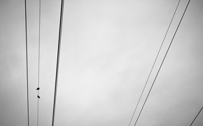 Picture the sky, birds, wire, minimalism