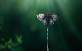 Picture rays, glare, background, butterfly, reed