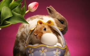 Wallpaper Tulip, basket, rabbits, eggs
