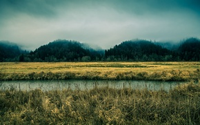 Picture the sky, trees, fog, river, Oregon