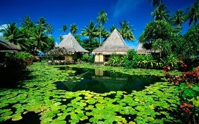 Picture summer, the sun, lake, palm trees, Island, hut, resort, water lilies, Tahiti