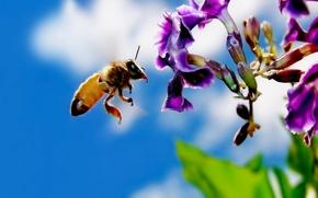Wallpaper bee, Flower