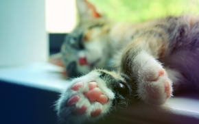 Picture cat, cat, macro, paws, sleeping, sill