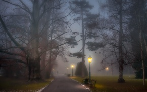 Picture trees, park, people, fog, path, foggy, benches, lamp posts