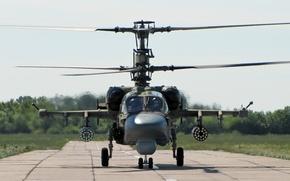 Picture helicopter, ka-52, Kamov, kamov, ka-52