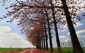 Picture road, field, autumn, the sky, leaves, trees
