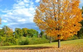 Picture field, autumn, leaves, tree, Autumn