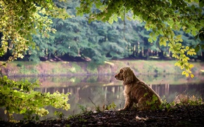 Picture leaves, branches, nature, dog