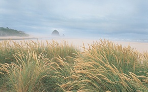 Wallpaper sea, beach, grass, shore, 153