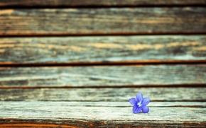 Picture flower, purple, macro, flowers, background, widescreen, Wallpaper, wallpaper, flower, widescreen, background, full screen, HD wallpapers, …