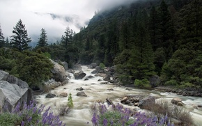 Picture Yosemite National Park, Merced River, Misty Merced