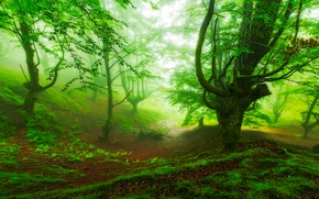 Wallpaper fog, slope, Spain, forest, Basque Country