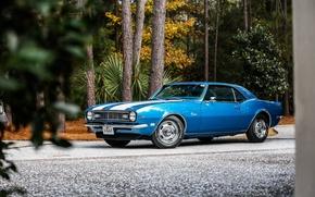 Picture Chevrolet, Camaro, Classic, Blue, 1968, z28