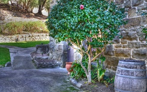 Picture flower, landscape, wall, tree, track, barrel, patio, pot, special effect