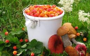 Wallpaper berries, cloudberry, harvest, summer, mushrooms, boletus, Russula