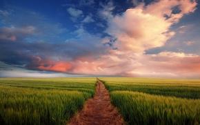 Wallpaper the sky, field, trail