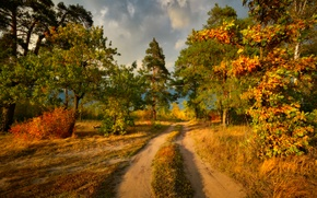 Picture road, trees, the colors of autumn