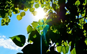 Picture the sky, the sun, green, tree, blue, ray, Leaves, Bunny