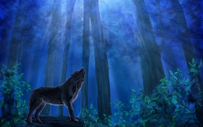 Picture animal, predator, wolf, painting, trees, leaves, noona, night, blue, the sky, forest