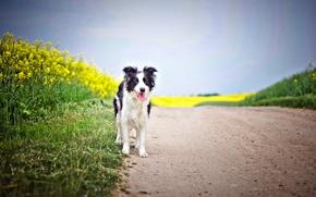 Picture road, dog, rape