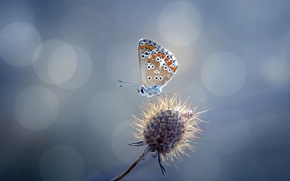 Picture glare, butterfly, plant, thorn