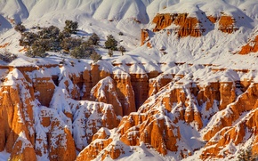 Picture winter, snow, trees, rocks, canyon